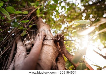 The Natural Beauty Of Wood, Roots, Trees, And Leaves. With The Warm Light Of The Sunset