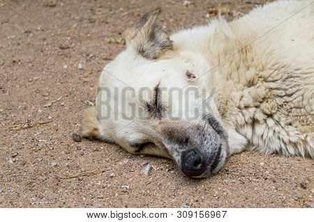 Close Up Of A Stray Dog Head Sleeping On The Ground In A Park.
