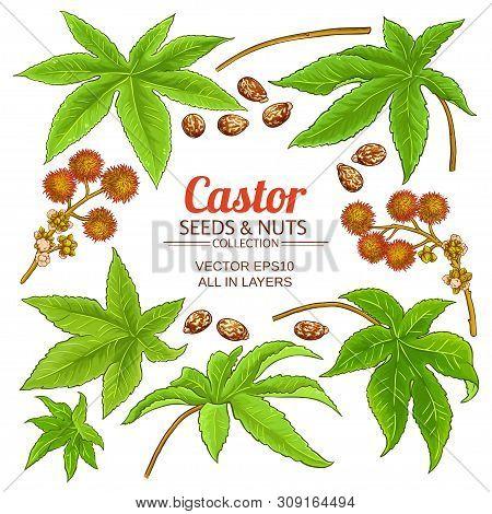 Castor Plant Elements Set On White Background