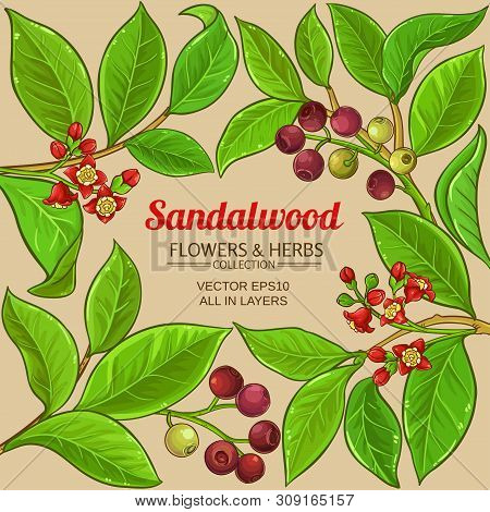 Sandalwood Branches Vector Frame On Color Background