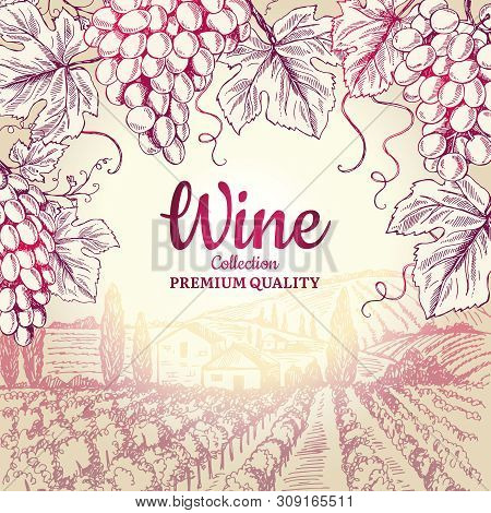 Wine Background. Grapes Leaves Branch Bottles Corkscrew Symbols For Frame Restaurant Menu Vector Des