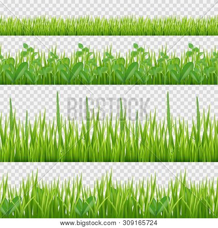 Grass Herbs Pattern. Nature Symbols Leaves And Herbs Horizontal Vector Seamless Background. Grass Gr