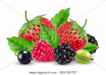 Realistic Berries Vector. Strawberry, Raspberry, Goose Berry, Blackberry Isolated On White Backgroun