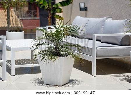 Corner Of Relaxation, Modern Furniture, Empty Grey Couch Wooden White Washed Table Big Potted Plant