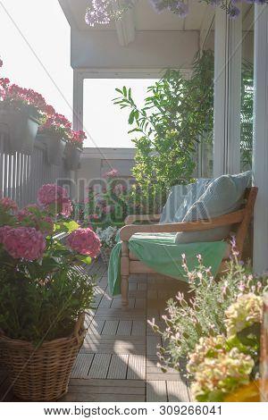 Balcony Plants, Beautiful Different Colored Flowers, Hydrangea, Dhalia, Transvaal Daisy