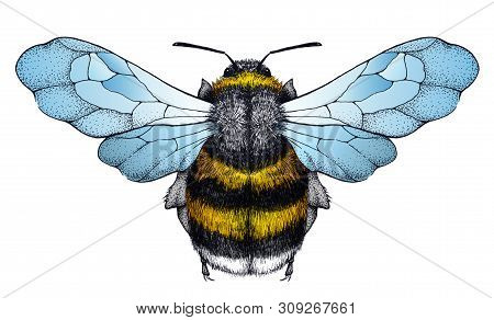 Honey Bee Tattoo. Bee With Blue Wings. Dotwork Tattoo. Symbol Of Diligence, Economy, Purity, Immorta