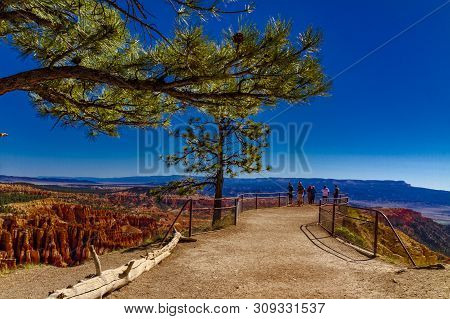 Grof Peouple Looking At Bryce Canyon From Inspiration Point With A Treee Branch As Foreground