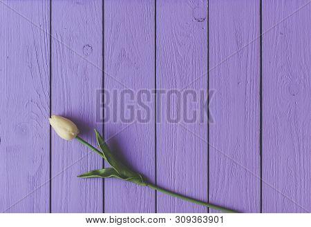 Spring Tulip Flower On Wooden Background. Tulip, Gardening Concept.