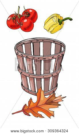 Set Of  Colored  Hand Drawn Tomatoes, Pepper, Box And Autumn Leaf. Ink And Colored Sketch. Color Ele