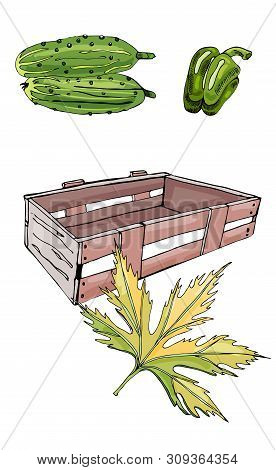 Collection Of  Green  Hand Drawn Cucumbers, Pepper, Box And Leaf. Ink And Colored Sketch. Color Elem