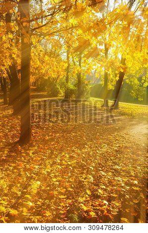 Autumn trees in sunny autumn park lit by sunshine - sunny autumn landscape in bright sunlight. Autumn park sunset scene