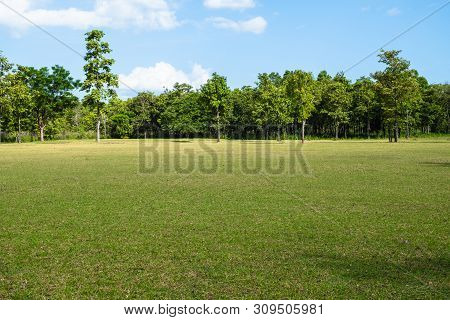 Park With Green Grass Field