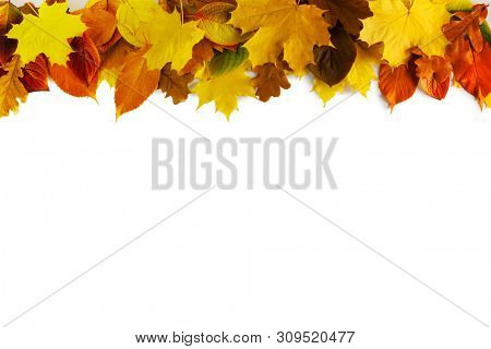 Autumn leaves border frame isolated on white background