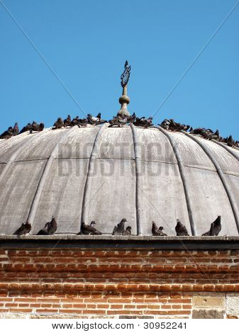 an image of pigeons on the roof