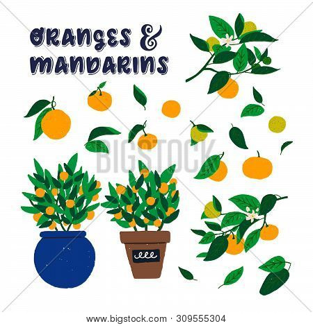 Oranges And Mandarins Lettering Inscription With Hand Drawn Citrus Branches And Two Bushes In Pots.