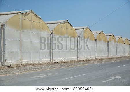 Commercial Glass Greenhouses In Azerbaijan . High Tech Industrial Production Of Vegetables And Flowe