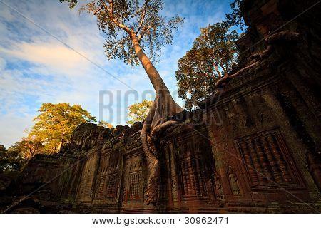 Tree Grows On Angkor Temple Wall