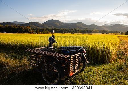 Vintage Scooter And Sidecar On Rice Field