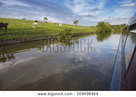 Landscape View Down Side Of Narrowboat In English Rural Countryside Scenery With Herd Of Friesian Do