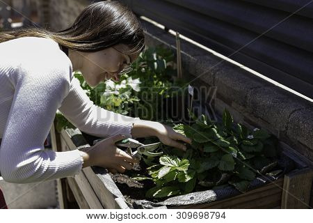 Beautiful Woman Taking Care Of Urban Vegetables Garden Also Known As Urban Farm Or Rooftop Garden