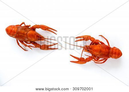 Two Boiled Crawfish Isolated On White. Top View. Flat Lay.