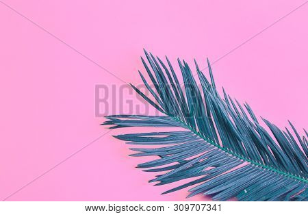 Beautiful Feathery Teal Palm Leaf On Vibrant Neon Pink Background. Summer Tropical Creative Concept.