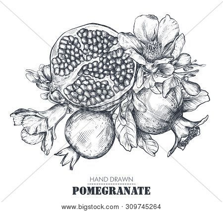 Vector Composition Of Pomegranate Fruits, Flowers, Branches.