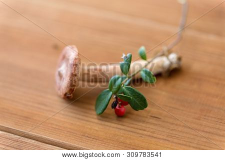 nature and environment concept - cowberry and lactarius rufus mushroom on wooden background