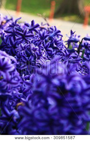 Purple Flowers In The Daylight. Nature Scene