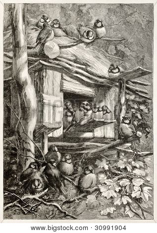 Tit's shelter in Jura forest, France. Created by Giacomelli, published on Magasin Pittoresque, Paris, 1882 poster