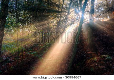 Sunbeams Through Foggy Misty Autumn Forest Landscape At Dawn