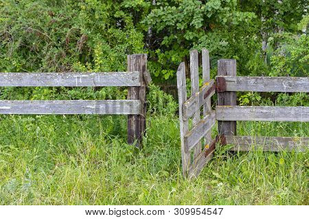 Old Wooden Rural Fence With Rickety Wicket, Untreated Wood With Signs Of Aging With Fungus And Moss.