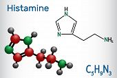 Histamine molecule. It is amine, nitrogenous compound, stimulant of gastric secretion, vasodilator, and centrally acting neurotransmitter. Structural chemical formula and molecule model poster