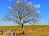 Countryside scene on Bom Jardim Village, Nobres, Mato Grosso, Brazil. Great landscape. Travel destination. Vacation travel. poster