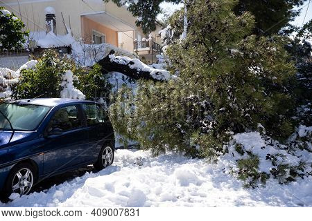 A Coniferous Fir Tree Broke And Fell On The Road After A Severe Snowstorm In The Suburbs Of The Athe