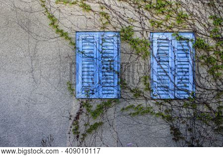 Old Blue Wooden Shutters Overgrown With Creepers. Shutters Closed By Night And A Hot Day.