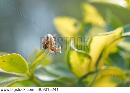 Wild Snail On Plant Leaf, Macro Antenna View, Natural Spring Ecosystem, Macro Animal Creature