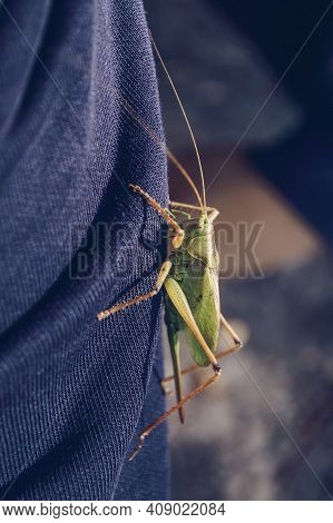 Close Up View Of Big Green Locust Sitting On Clothes