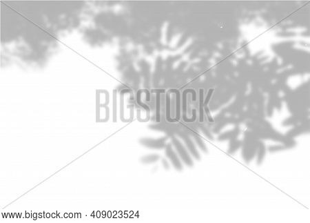 Vector Summer Background Of Plant Shadows. Shadow From The Leaves Of A Rowan Branch On A White Wall.