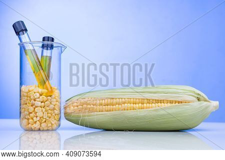 Ethanol Biofuel Derived From Corn Maze With Beaker Test Tubes In Laboratory On Blue Background
