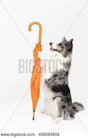 A Properly Trained Dog Can, In A Sitting Position, Hold An Orange Umbrella In Its Front Paws. Border