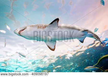 Giant Scary Shark With Big Teeth Mouth Under Water In Aquarium. Sea Ocean Marine Wildlife Predator D