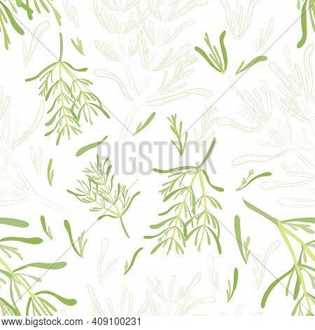 Seamless Pattern With Colored And Outlined Rosemary Leaves And Twigs. Rosemary Branches And Leaves I