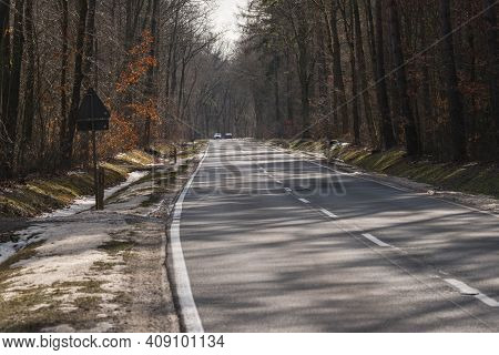 Leafy Forest. It Is Early Spring, The Trees Are Sparse, Brown Last Year\'s Leaves. There Is An Aspha