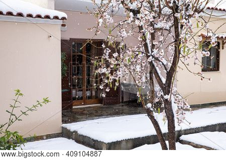 Winter Morning Snow Covered Blooming Almond Tree Branches In Athens, Greece, 15th Of February 2021.