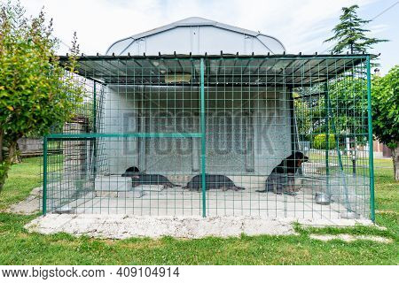 Sad Abandoned Dogs Closed In Iron Net, Neglected Puppies Need Home And Protection. Animal Shelter, C