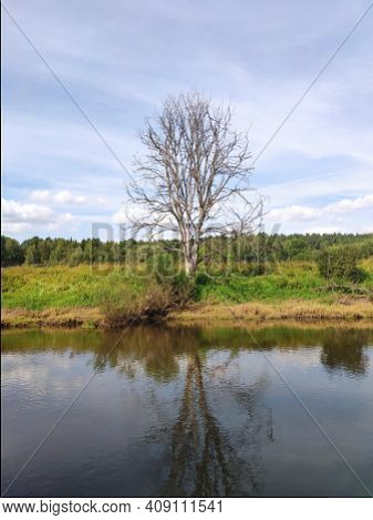 An Old Lonely Dead Tree On The Bank