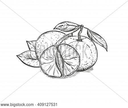Hand Drawn Sketch Black And White Of Mandarin, Tangerine Fruit, Slice, Leaf, Segment. Vector Illustr
