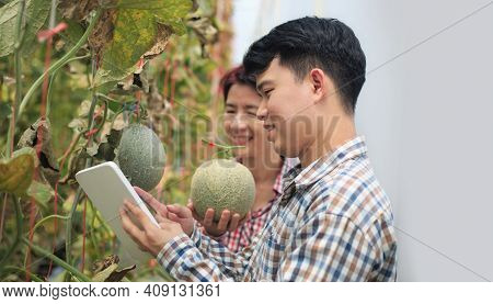 Farmers Using Tablet Computer Check The Damaging Diseases In Melons Leaves Infected By Downy Mildew