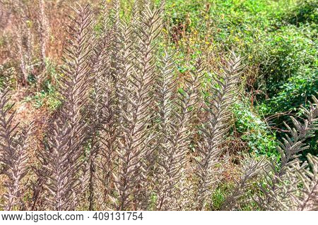 Uncultivated Tropical Green Plants . Wilderness Nature Background